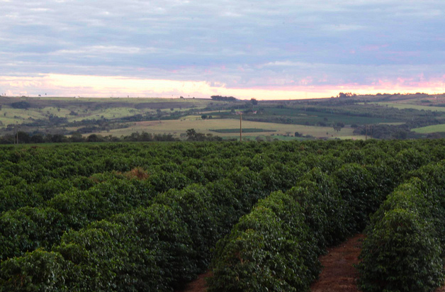 Flatter Brazilian coffee farm