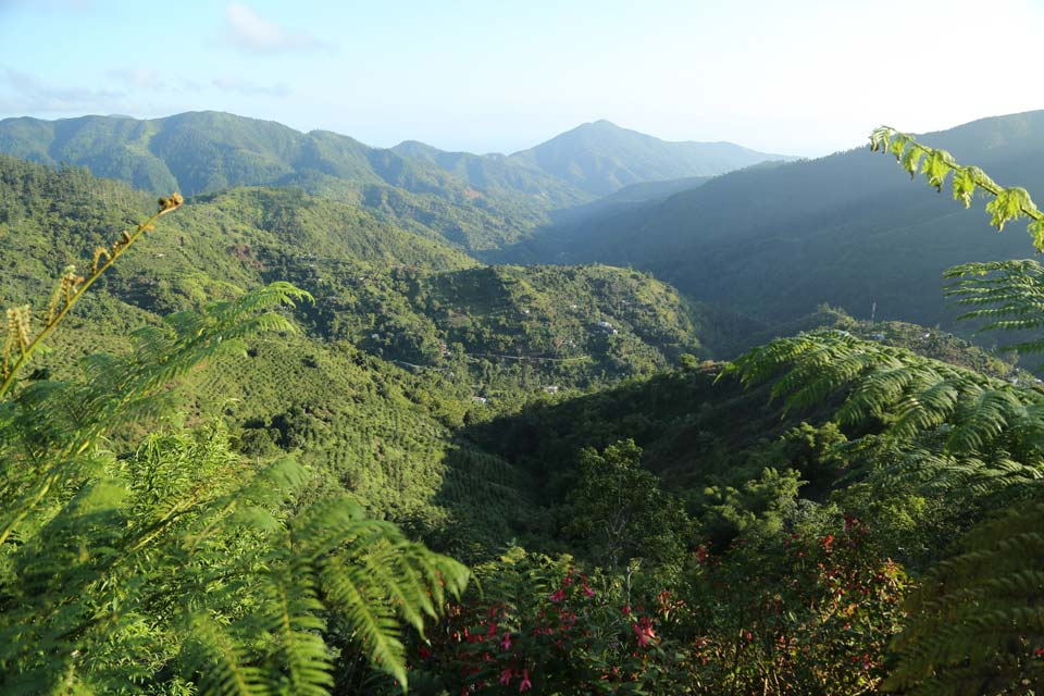 jamaica blue mountain peak
