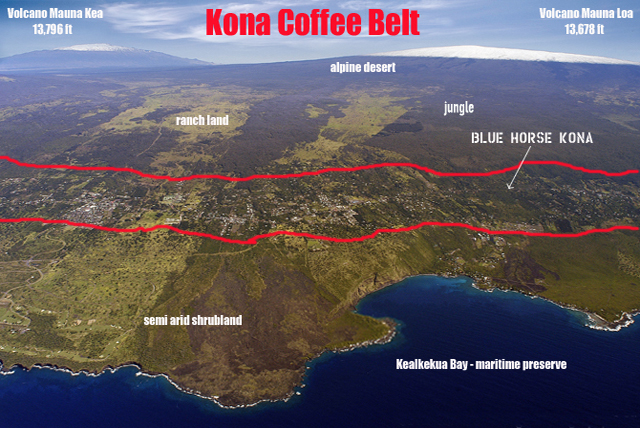 Kona bean belt