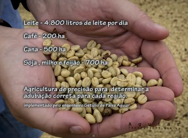 coffee harvest in brazil