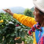 Where Do The Best Coffee Beans In The World Come From? (Part 2)