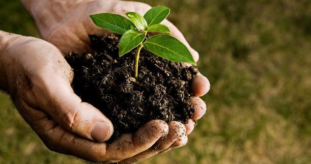 tree planting and coffee