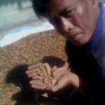 Best Indonesian Coffee – Beans, Brands, and Kopi Luwak