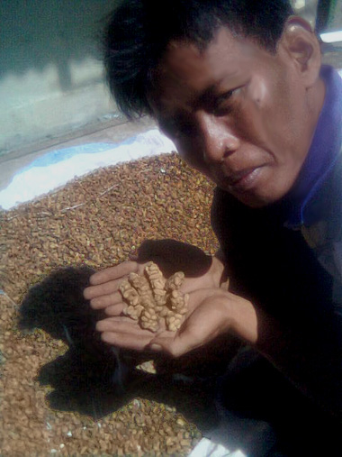 indonesian coffee farmer harvests civet cat poop coffee