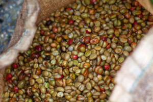 wet processing coffee beans indonesia