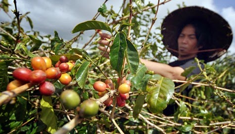 indonesian coffee beans and brands best in world