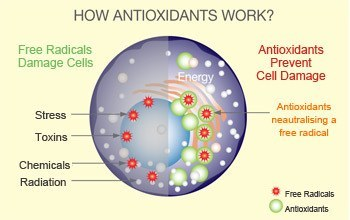 are there antioxidants in coffee