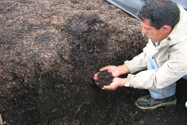 worm-composting-coffee grounds program