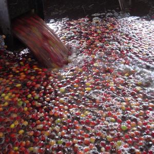 coffee bean washing