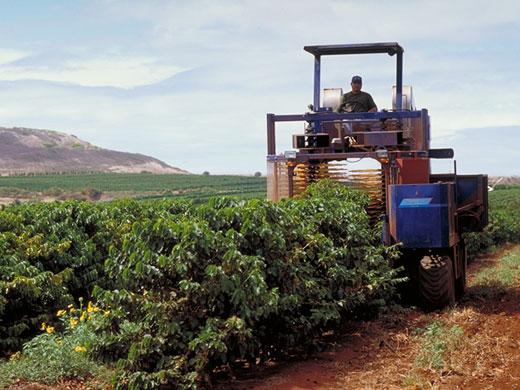 coffee harvesting machine