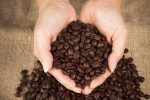 coffee beans explained guide to understanding coffee roasts