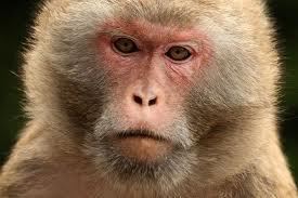 monkey spit coffee